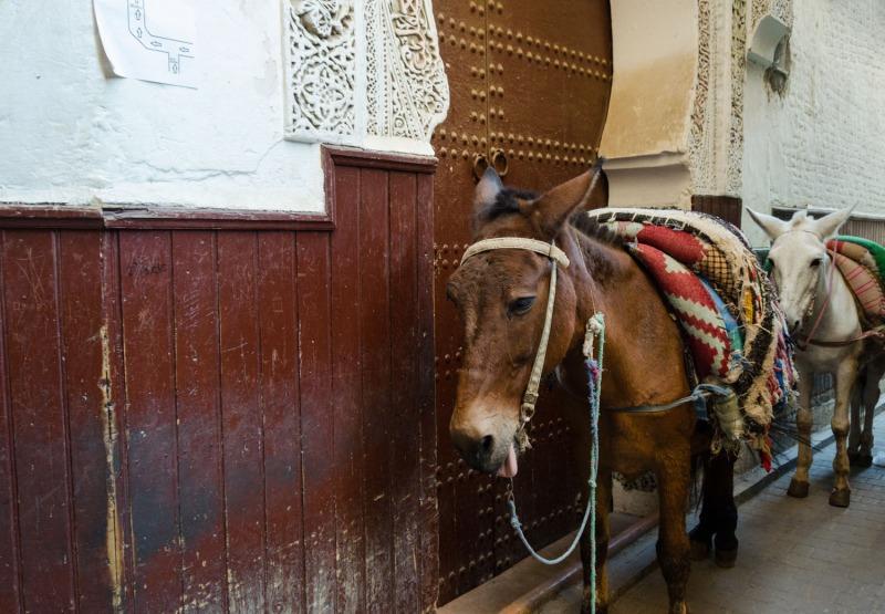 Morocco - Fez medina