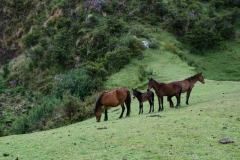 Wild Andes-20