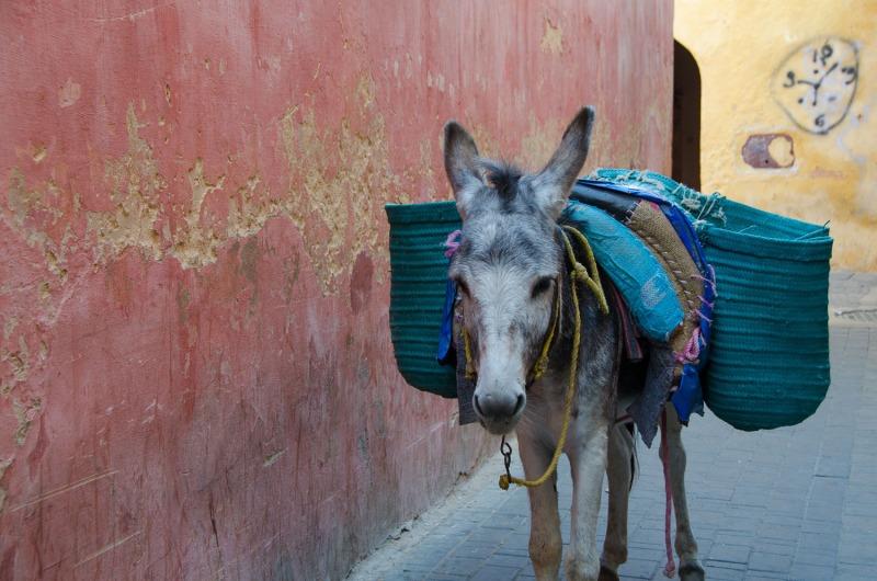 Morocco - Meknes